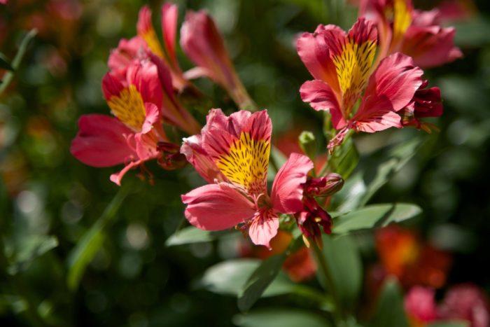 7 hectares de parc fleuri au Camping Le Paradis